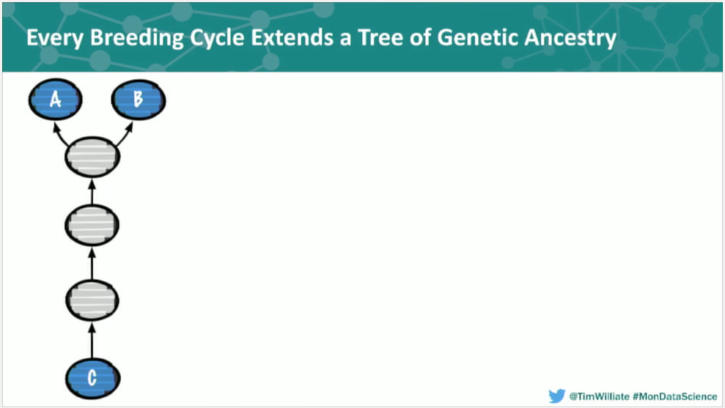 Genetic ancestry in the breeding cycle organized as a data tree
